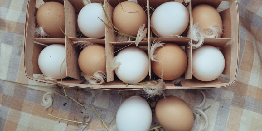 What Should I Know About Egg Quality?