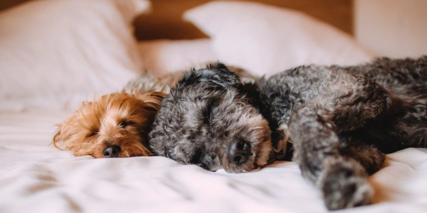 Natural Pet Products to Keep Your Pets Healthy and Happy