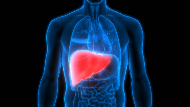 The Benefits of Detoxing the Liver