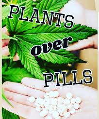 HB Naturals Network Marketing Company Why Are Plants Better Than Pills?